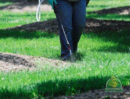 Abbotsford Weeding