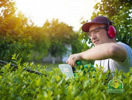 Richmond Hedge Maintenance