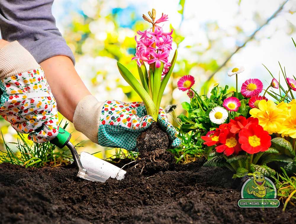 Professional Garden Planning