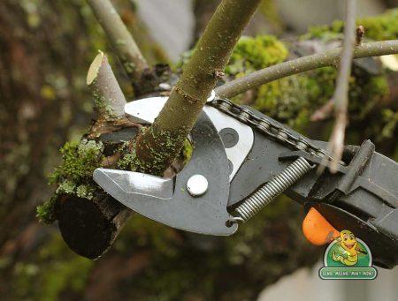 The Practicalities of Pruning