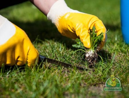 Whacking Weeds & Promoting Healthy Plant Life