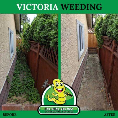 Whacking Weeds