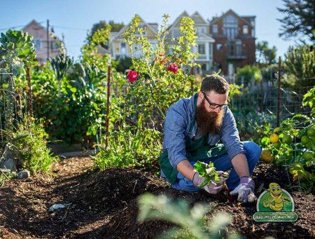 Saanich Gardening