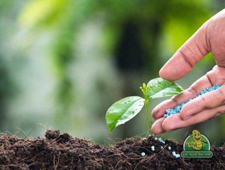 Saskatoon Fertilizing