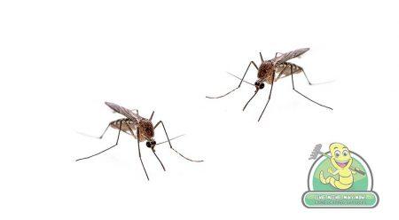 Edmonton Mosquito Control