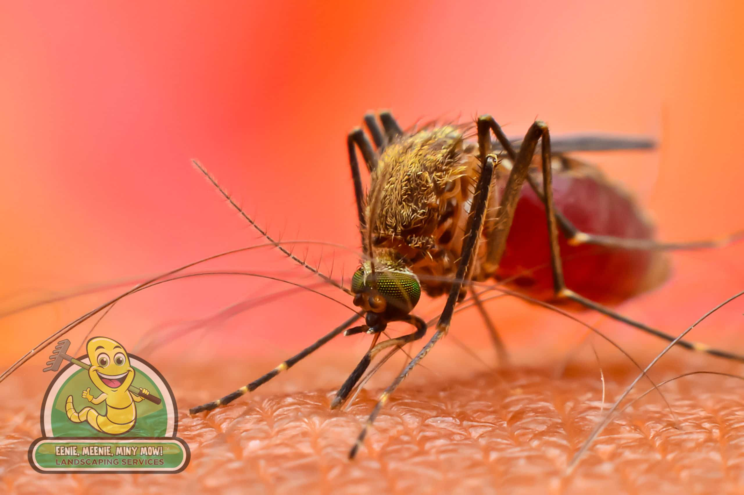 Making a Dent in Mosquito Populations