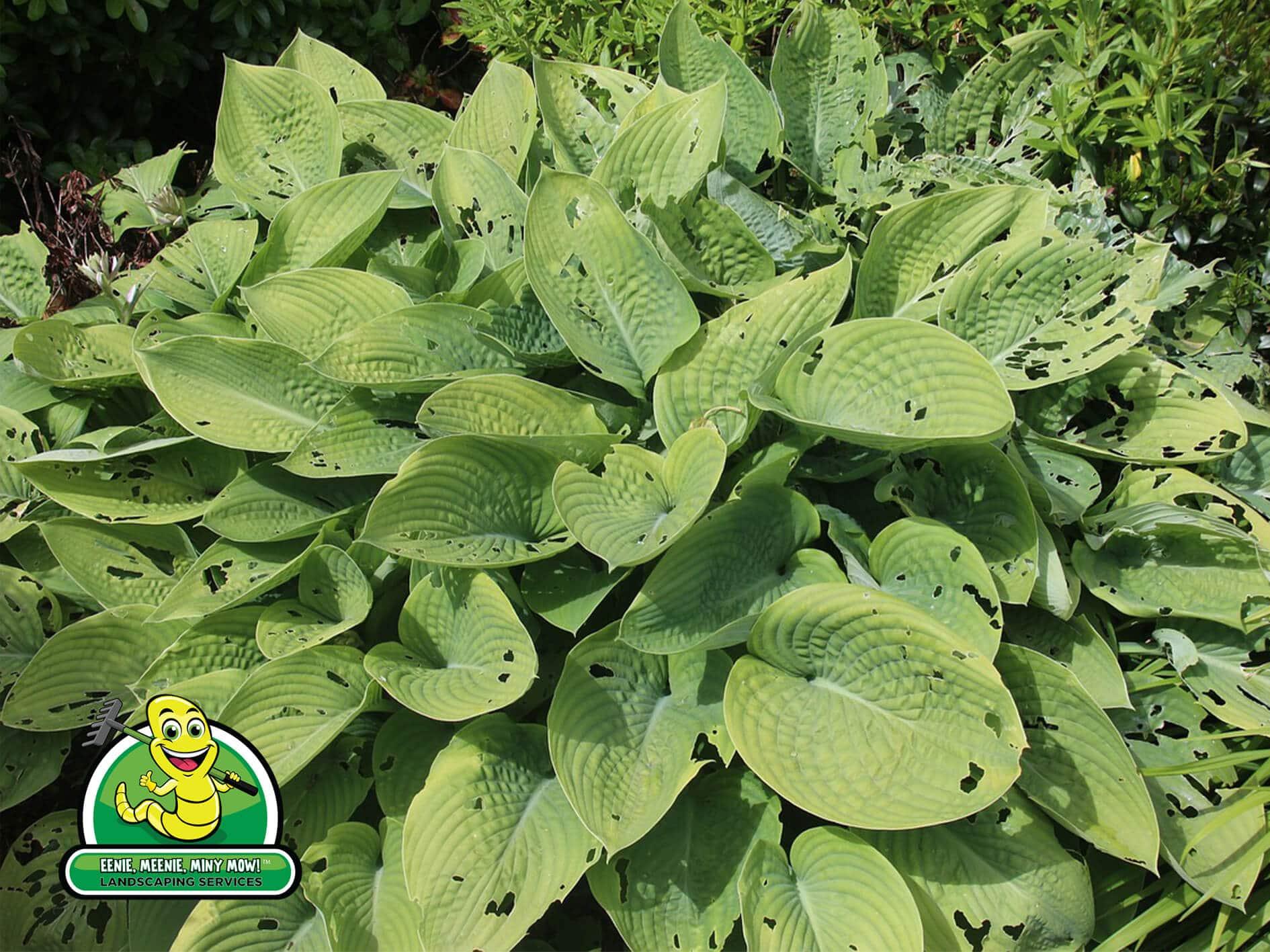 Planting for Pest Prevention