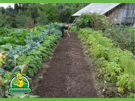 March Madness for Gardens & Lawns