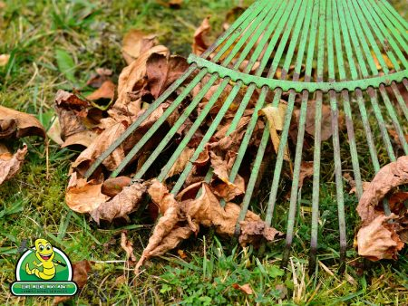 Suiting Up For Spring Cleaning : When to Rake and When to Wait