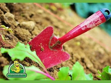 Local Lawn and Gardening Services: Expert Results, Right Next Door
